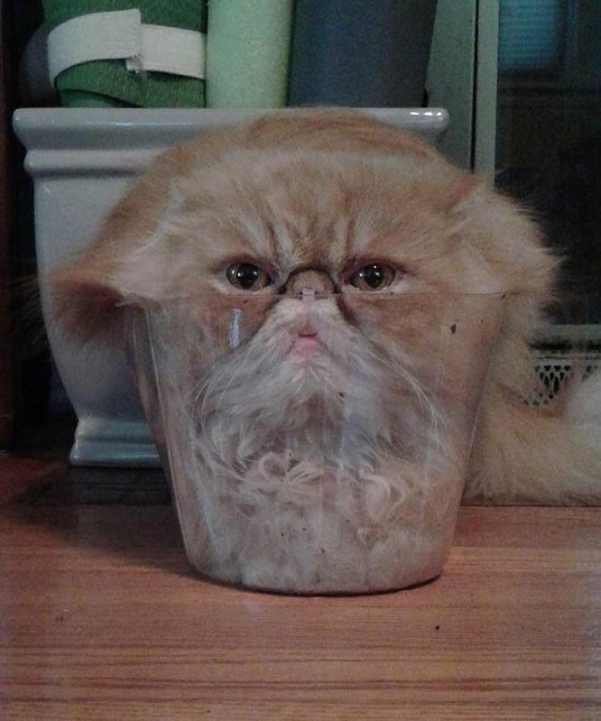 23 hình ảnh chứng minh loài mèo có thể yên vị ở bất cứ đâu ảnh 3