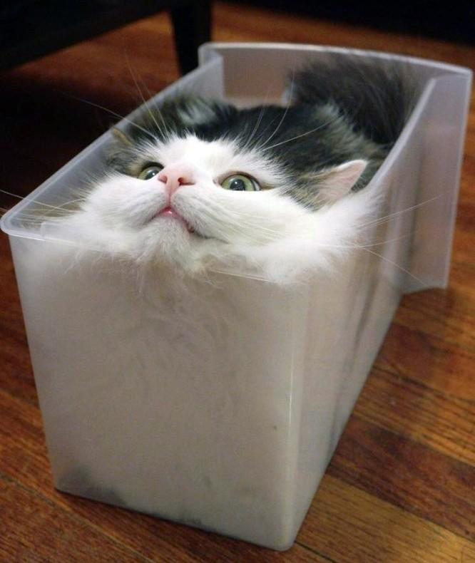 23 hình ảnh chứng minh loài mèo có thể yên vị ở bất cứ đâu ảnh 5