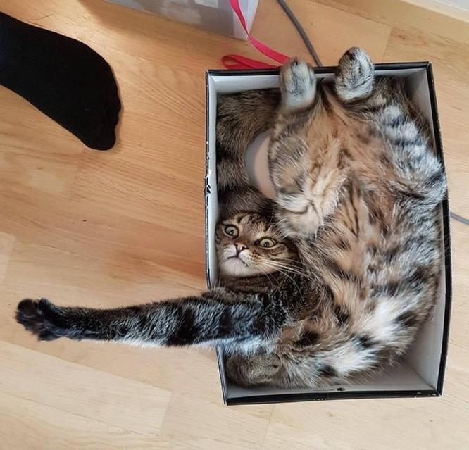23 hình ảnh chứng minh loài mèo có thể yên vị ở bất cứ đâu ảnh 6