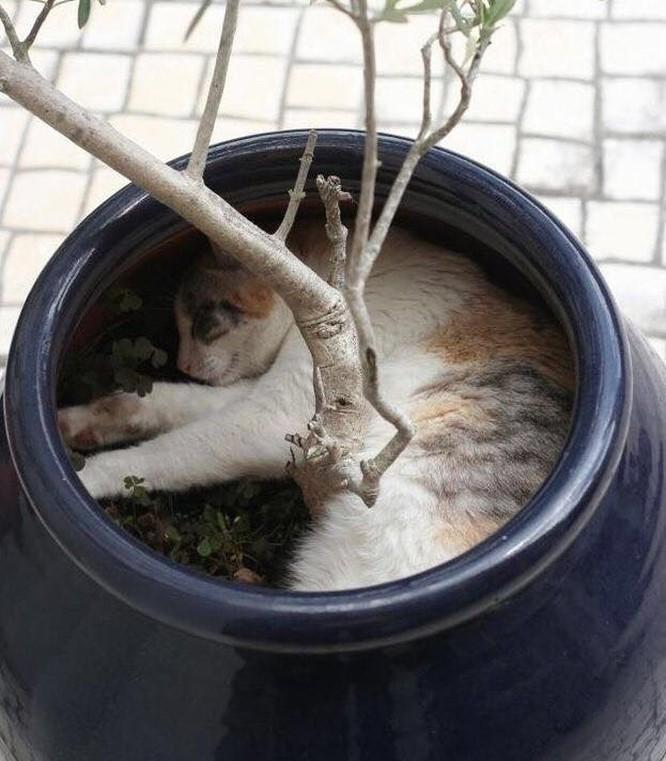 23 hình ảnh chứng minh loài mèo có thể yên vị ở bất cứ đâu ảnh 17