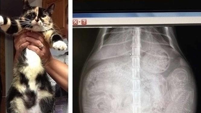 12 điều đáng kinh ngạc chỉ có thể nhìn thấy qua máy chụp X-quang ảnh 8