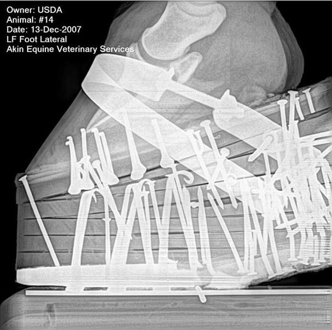 12 điều đáng kinh ngạc chỉ có thể nhìn thấy qua máy chụp X-quang ảnh 1