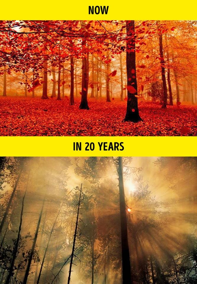 9 dấu hiệu đáng báo động từ hiện tượng trái đất nóng lên ảnh 5