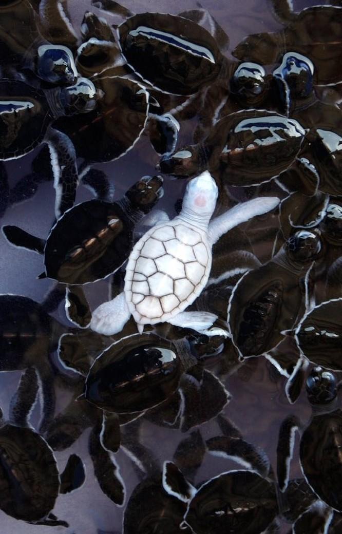 Vẻ đẹp của 23 động vật bạch tạng hiếm gặp như đến từ hành tinh khác ảnh 3