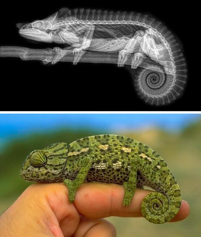 14 hình ảnh độc đáo của động vật qua máy chụp X-quang ảnh 8