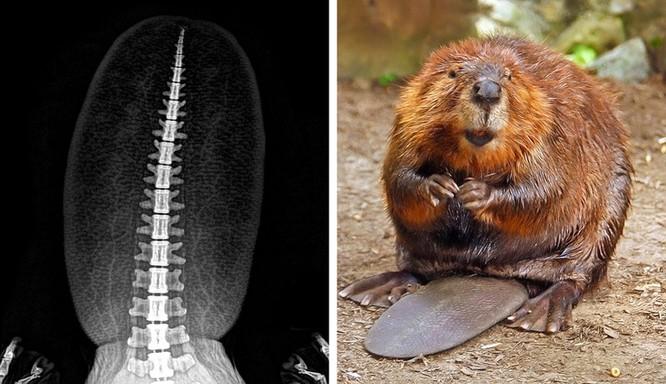 14 hình ảnh độc đáo của động vật qua máy chụp X-quang ảnh 13