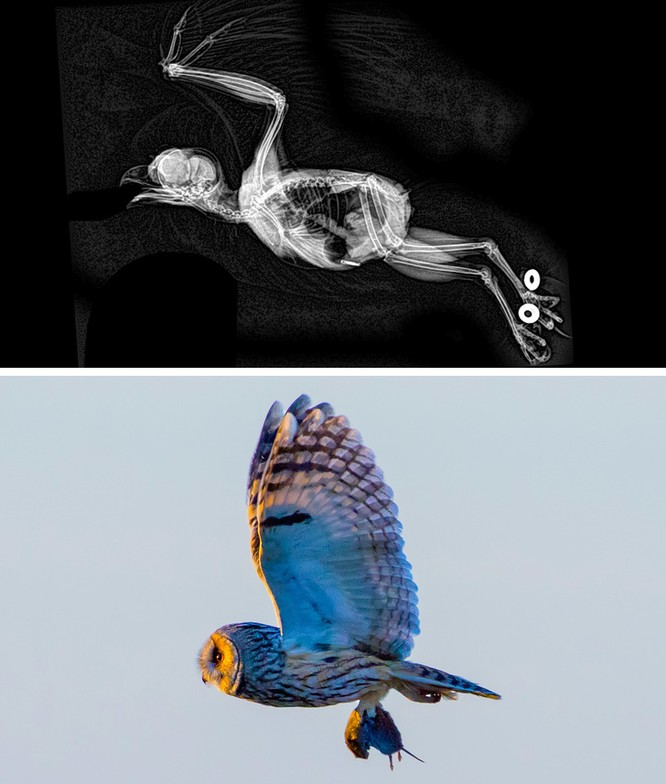 14 hình ảnh độc đáo của động vật qua máy chụp X-quang ảnh 10