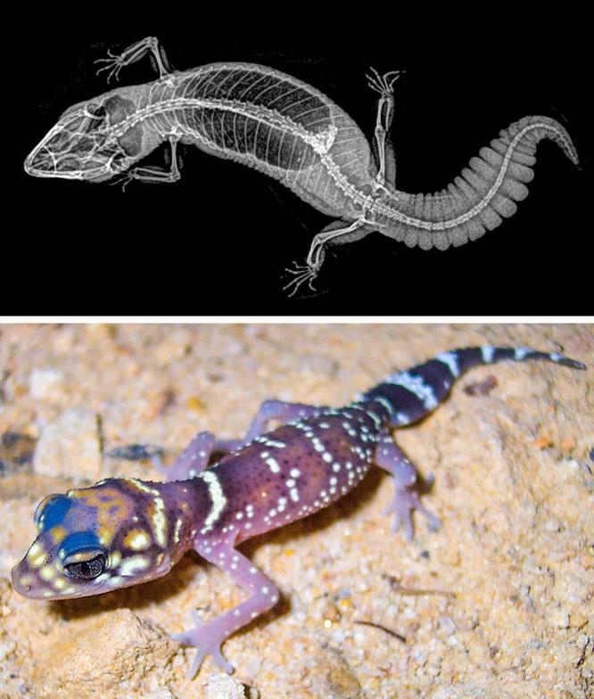 14 hình ảnh độc đáo của động vật qua máy chụp X-quang ảnh 5