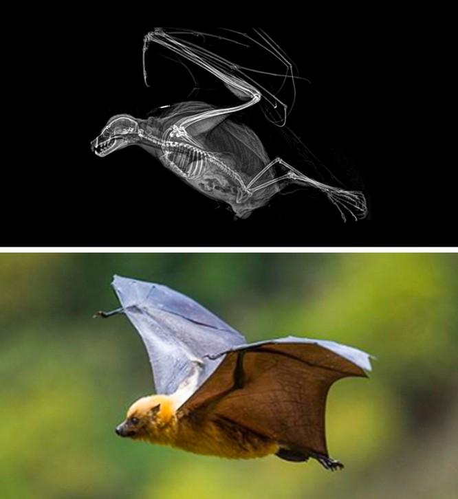 14 hình ảnh độc đáo của động vật qua máy chụp X-quang ảnh 1
