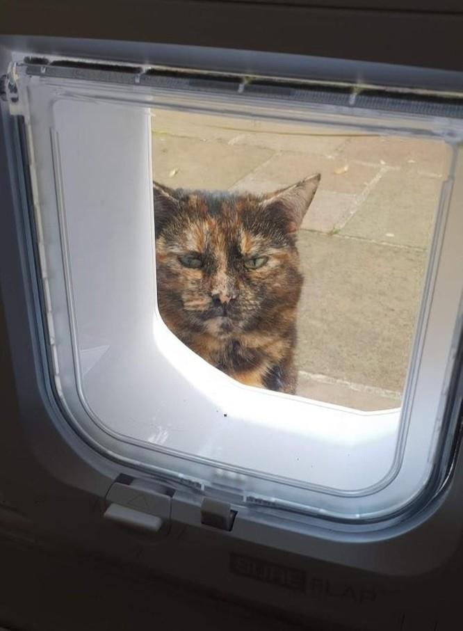 19 hình ảnh dễ thương của loài mèo khiến bạn không thể rời mắt ảnh 17