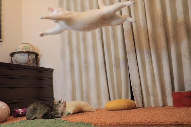 19 hình ảnh dễ thương của loài mèo khiến bạn không thể rời mắt ảnh 9