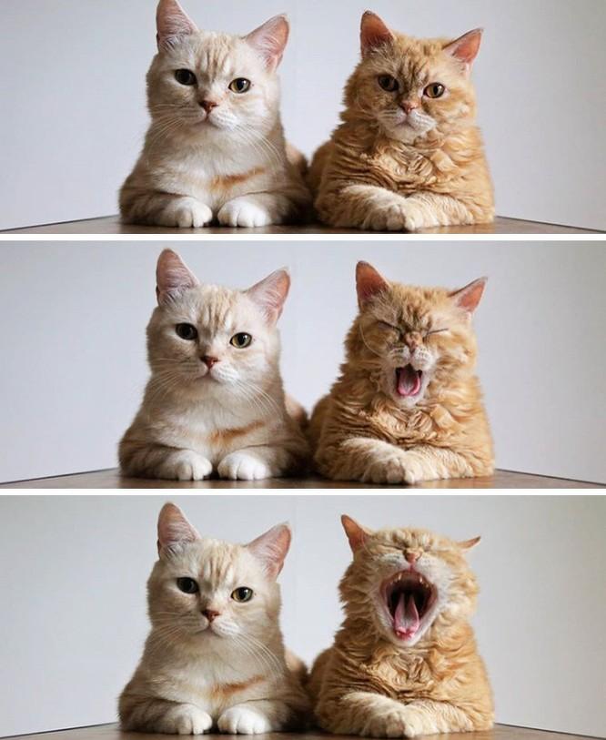 19 hình ảnh dễ thương của loài mèo khiến bạn không thể rời mắt ảnh 2