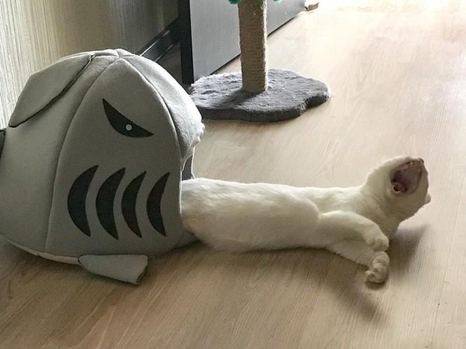 19 hình ảnh dễ thương của loài mèo khiến bạn không thể rời mắt ảnh 1