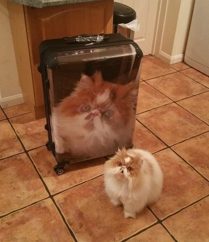 19 hình ảnh dễ thương của loài mèo khiến bạn không thể rời mắt ảnh 12