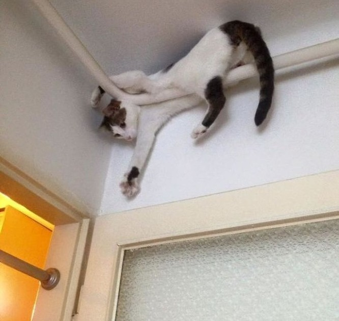 19 hình ảnh dễ thương của loài mèo khiến bạn không thể rời mắt ảnh 11