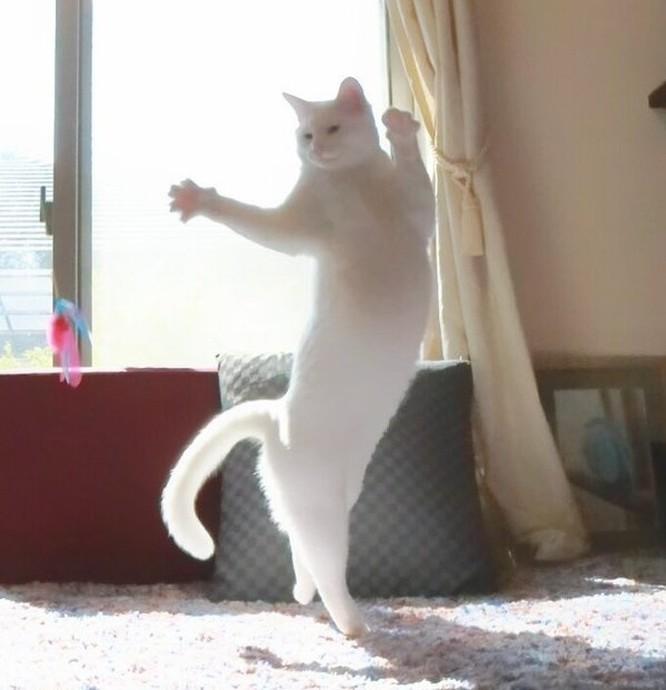 19 hình ảnh dễ thương của loài mèo khiến bạn không thể rời mắt ảnh 7