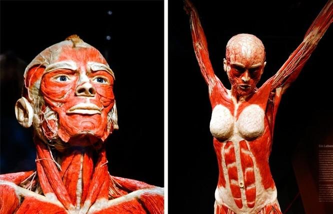 10 sự thật kì lạ về những bí ẩn trong cơ thể con người ảnh 7