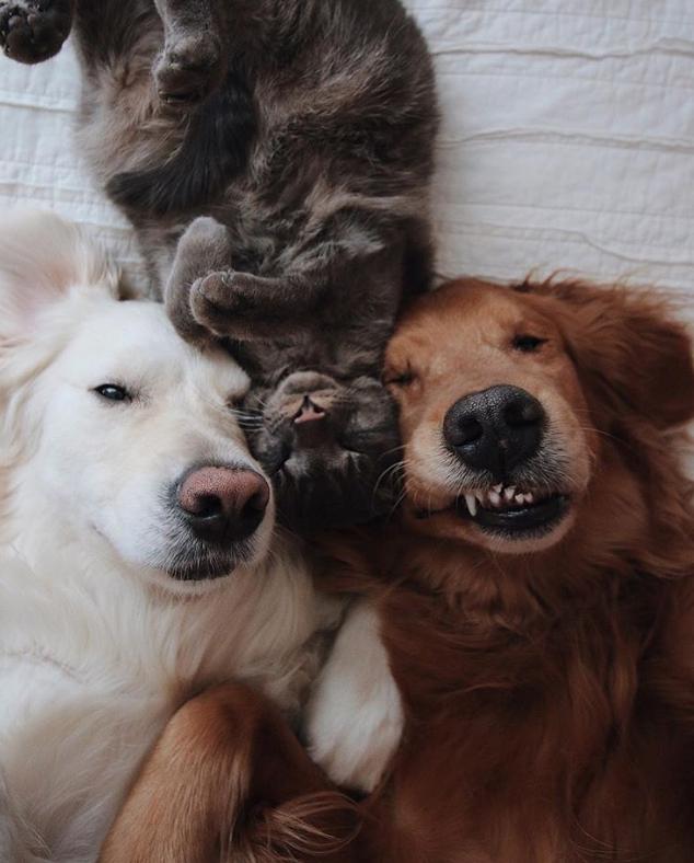 21 hình ảnh dễ thương của động vật mô phỏng hành động con người ảnh 18