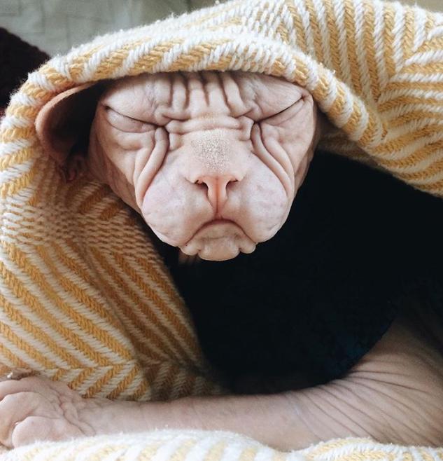 21 hình ảnh dễ thương của động vật mô phỏng hành động con người ảnh 8