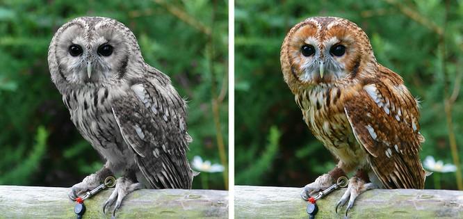 Các loài động vật đã tiến hóa như thế nào ? ảnh 11