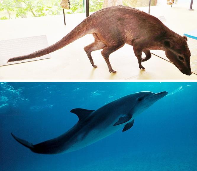 Các loài động vật đã tiến hóa như thế nào ? ảnh 9