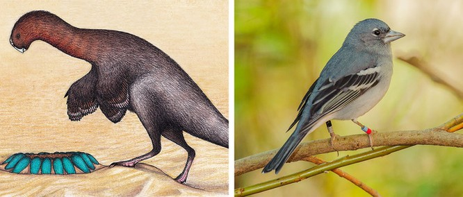 Các loài động vật đã tiến hóa như thế nào ? ảnh 8