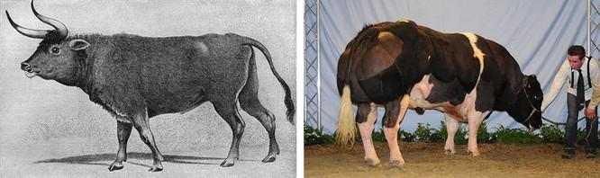 Các loài động vật đã tiến hóa như thế nào ? ảnh 3