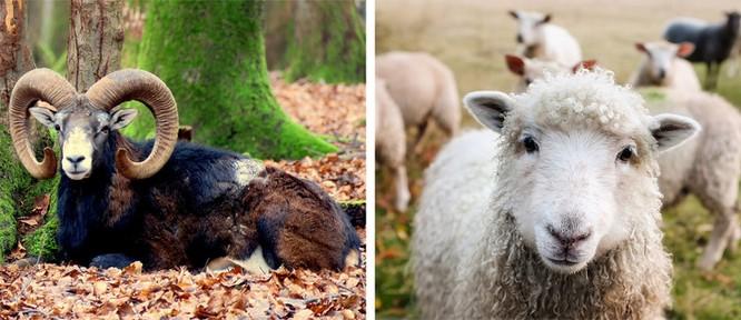 Các loài động vật đã tiến hóa như thế nào ? ảnh 1