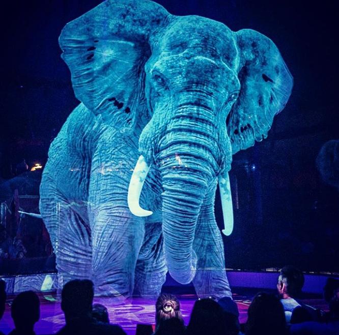Ấn tượng màn trình diễn động vật hoang dã tại rạp xiếc 4.0 ảnh 1