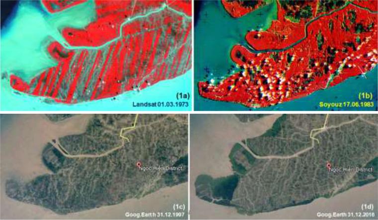 Diễn tiến rừng ngập mặn tại huyện Ngọc Hiển, tỉnh Cà Mau