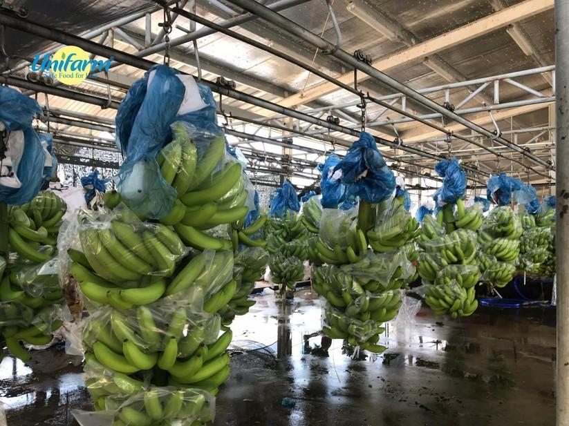 Unifarm đi đầu đưa ứng dụng công nghệ cao vào nông nghiệp ảnh 3