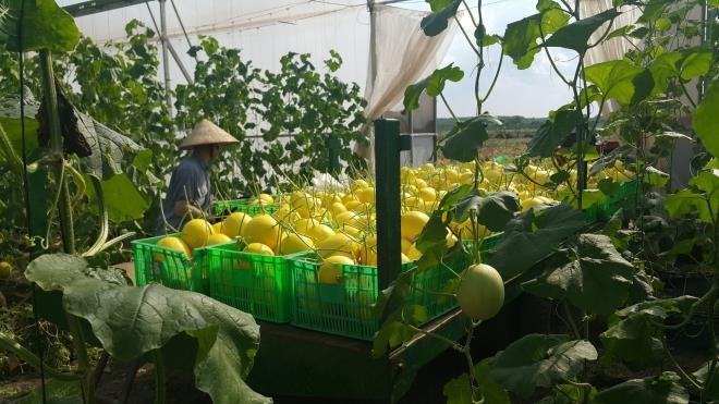 Unifarm đi đầu đưa ứng dụng công nghệ cao vào nông nghiệp ảnh 4