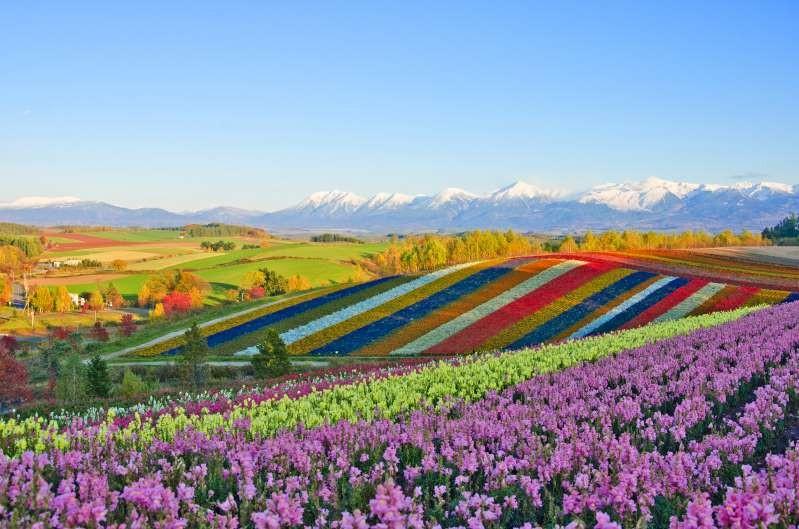 Những cánh đồng hoa đẹp nhất thế giới khiến ai cũng phải ngẩn ngơ ảnh 4