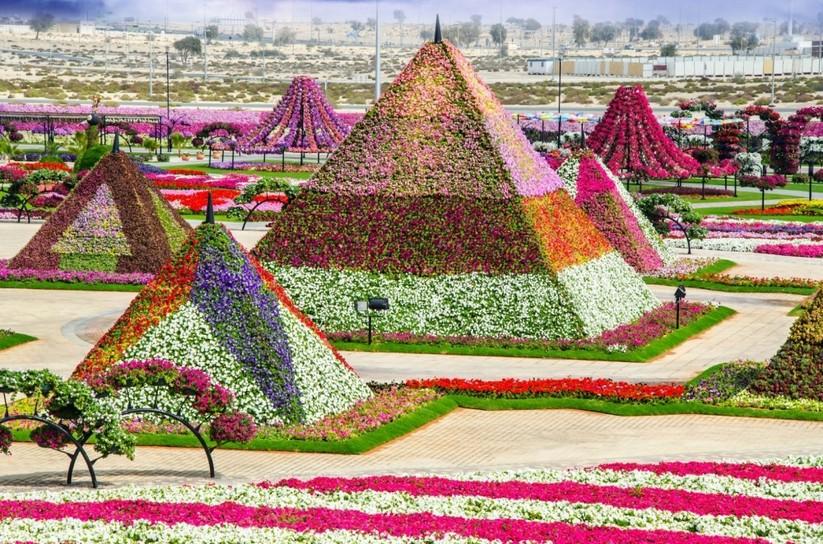 Những cánh đồng hoa đẹp nhất thế giới khiến ai cũng phải ngẩn ngơ ảnh 1