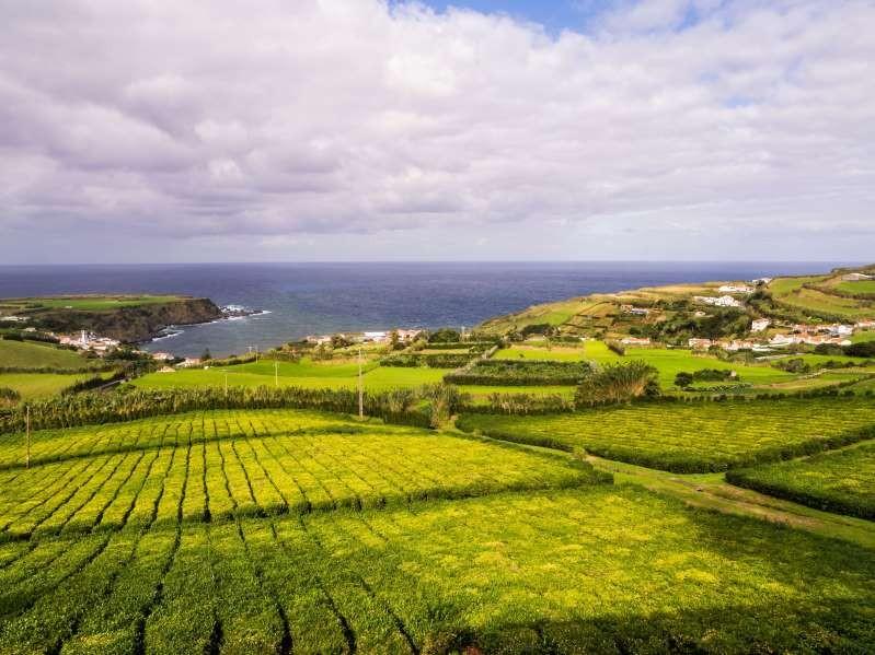 Nông trường chè Bồ Đào Nha