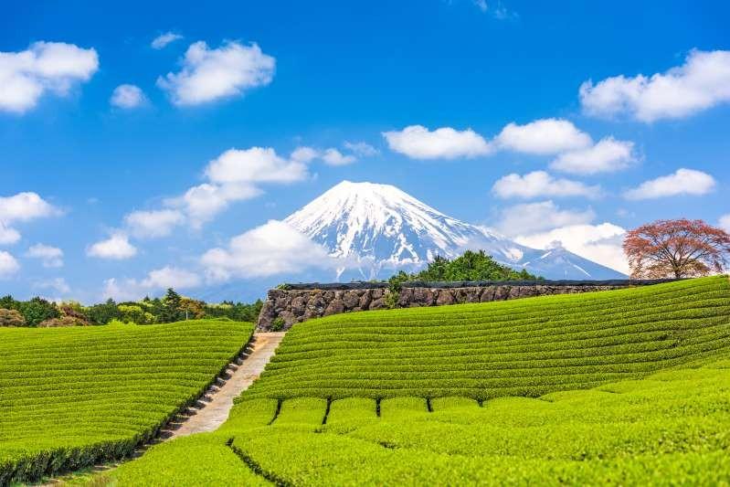 Nông trường chè Nhật Bản