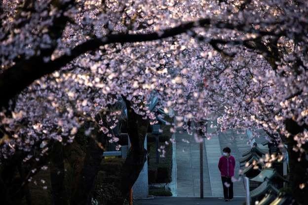 Tỉnh Saitama, Nhật Bản (Ảnh: Reuters)