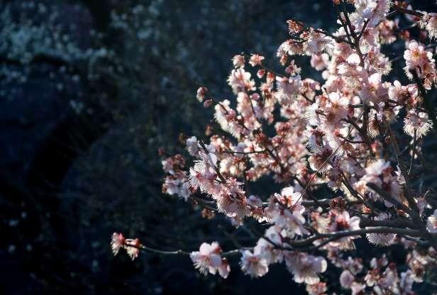 Công viên Ueno ở Tokyo, Nhật Bản (Ảnh: Shutterstock)